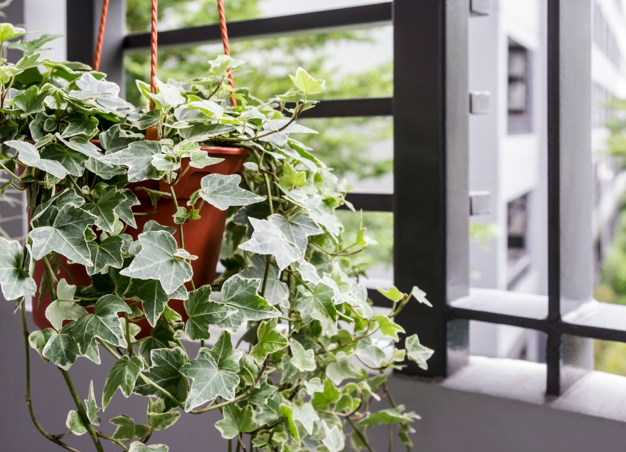 10-air-purification-trees-for-home-03