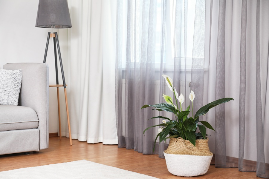 10-air-purification-trees-for-home-04
